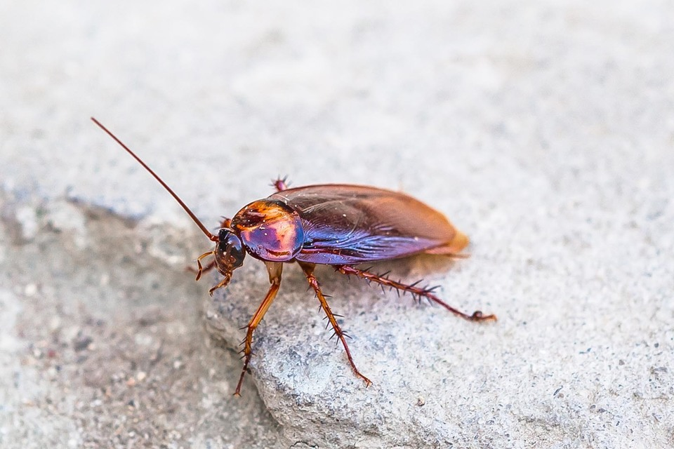 Cockroach on stone