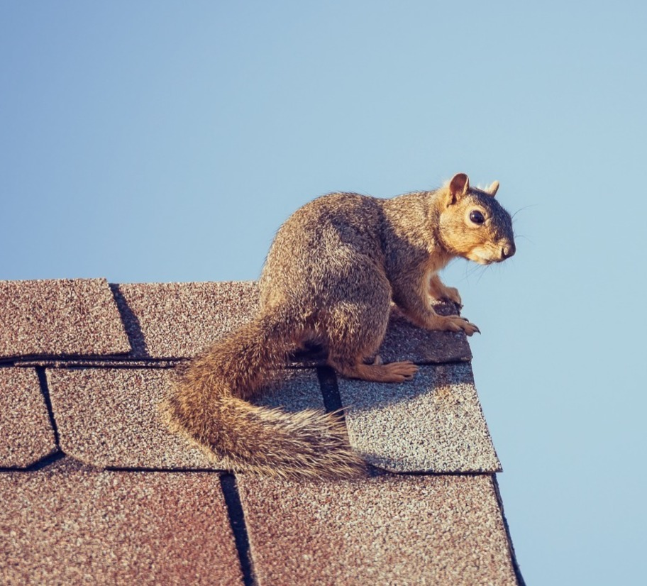 Squirrel sat on the edge of a roof