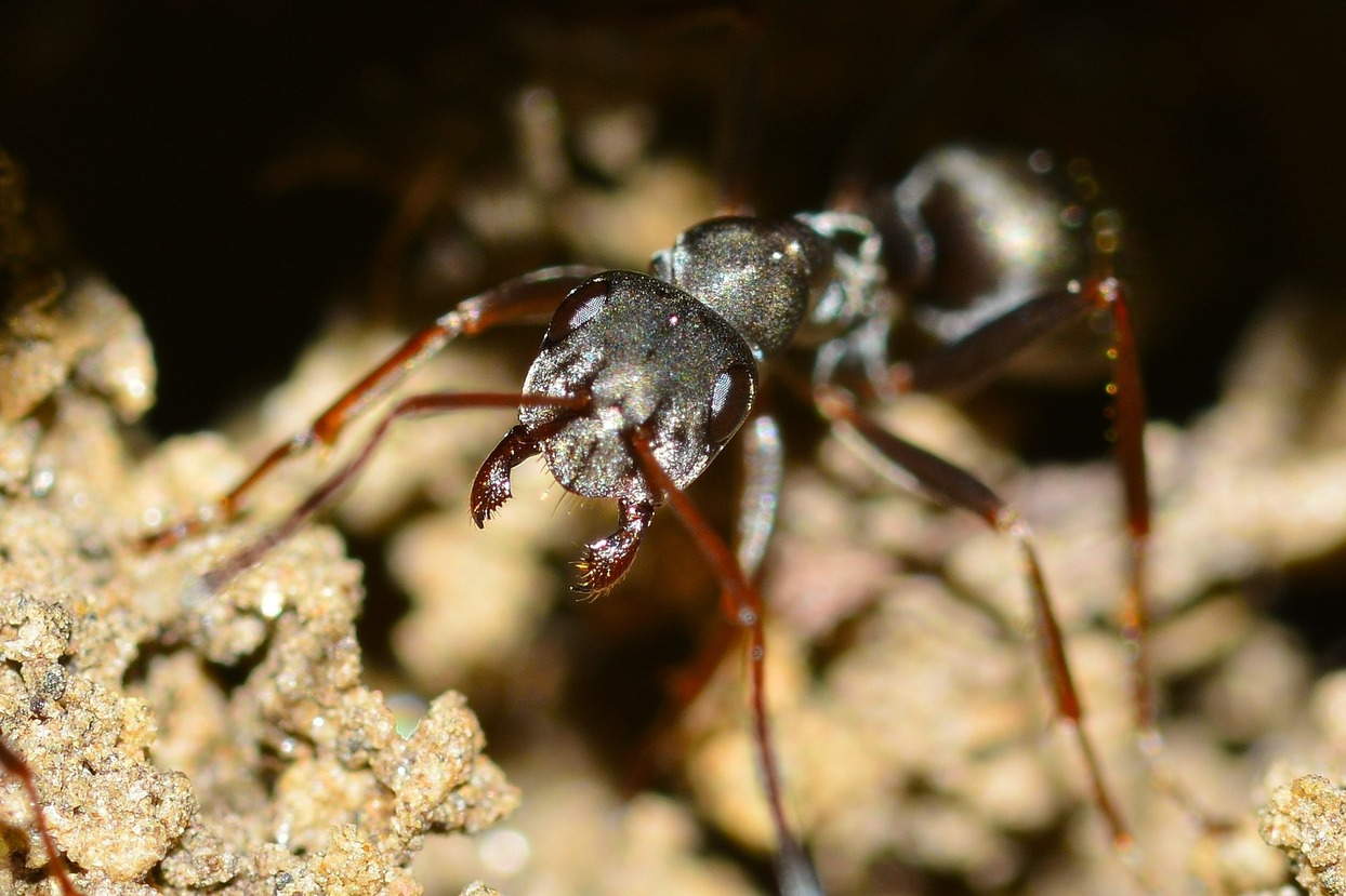 Close up of a ant